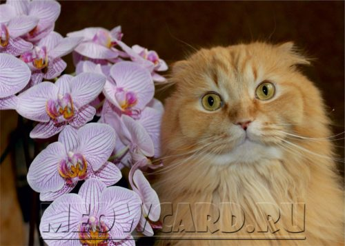Ёлка-и-орхидея