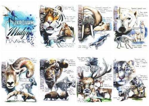 Набор-WWF